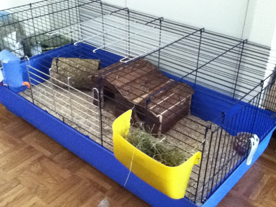 Jetsetting guinea pigs swiss pet laws and my precious for 2 story guinea pig cages for sale