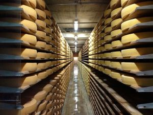 Cheese-cellar at the Maison du Gruyeres.