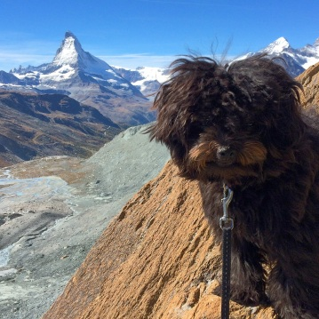 """Coelle says: """"Yup, that's the Matterhorn bitches"""""""